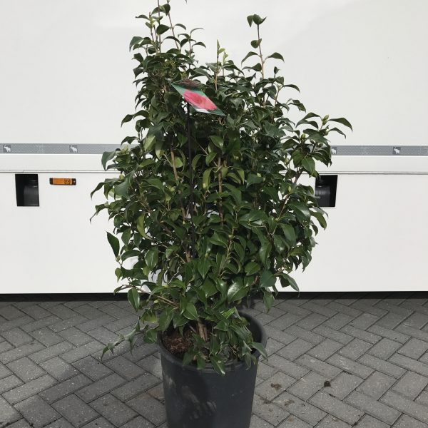 planten fotos 168
